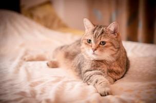 離婚協議書で定めておくべきペットに関する重要事項