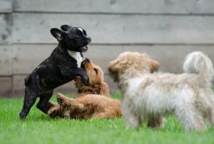 ペットのしつけ・飼育方法に関する知識