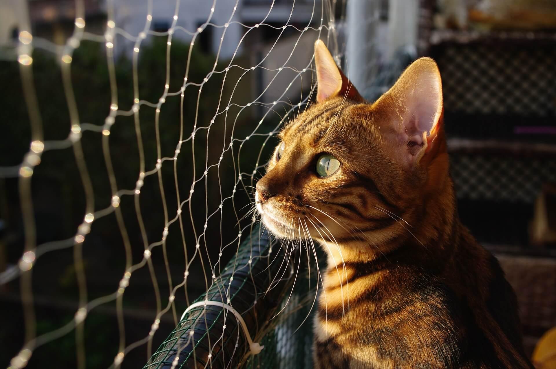 ペットのために財産を残す、飼い主が選べる3つの方法