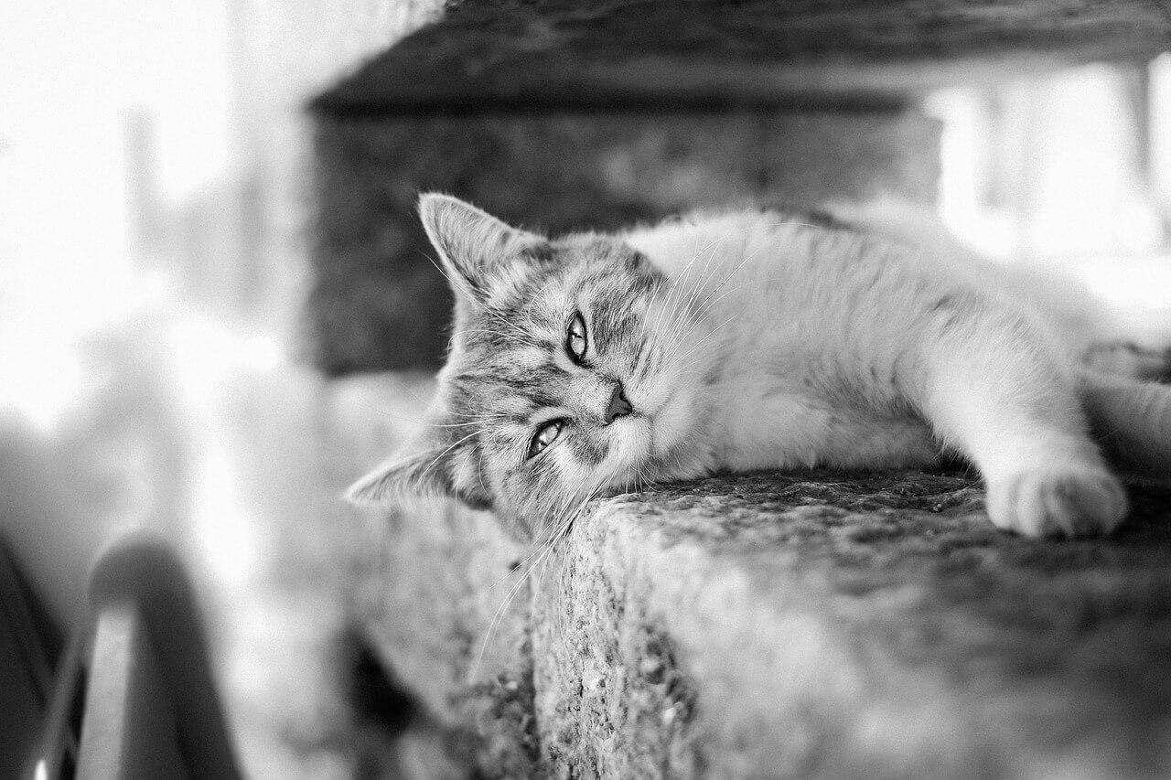 愛犬・愛猫のための財産を負担付遺贈で管理する選択肢