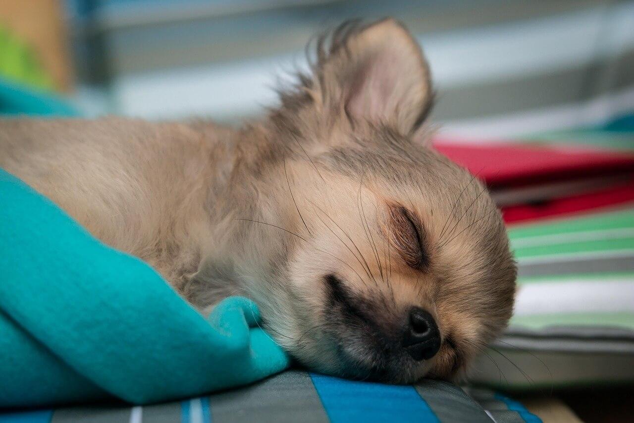 犬の譲渡書類に記載するべきワクチン接種の具体的な記載例