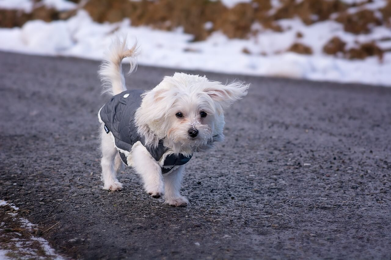 絶対避けたい!愛犬を迷子にしない3つの有効な対策