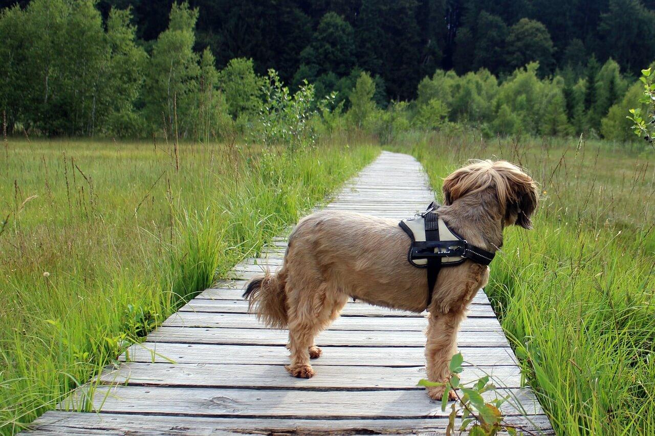 愛犬の散歩は絶好のチャンス!新しいいぬ友と繋がる12の秘訣