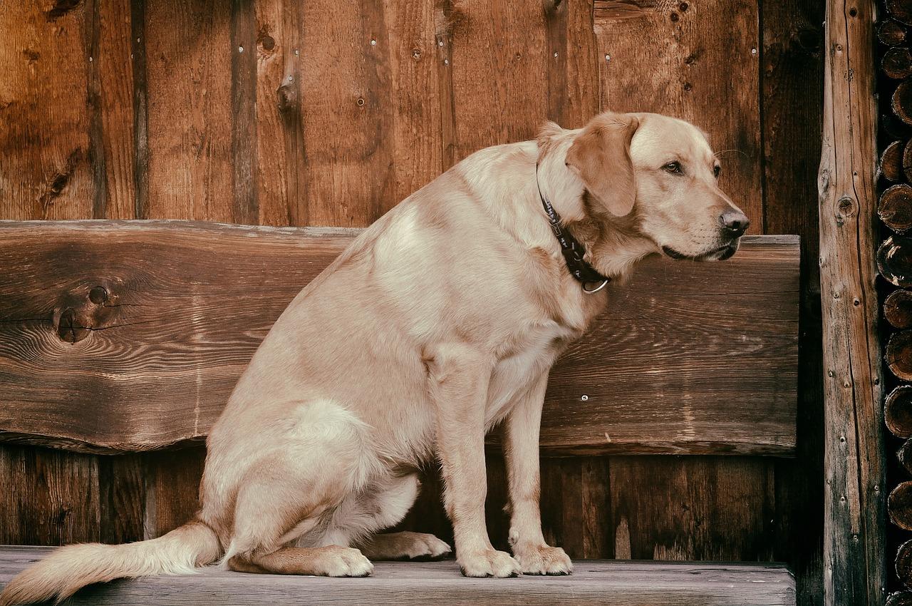 愛犬と飼い主の将来を考えた、老犬ホームという選択肢