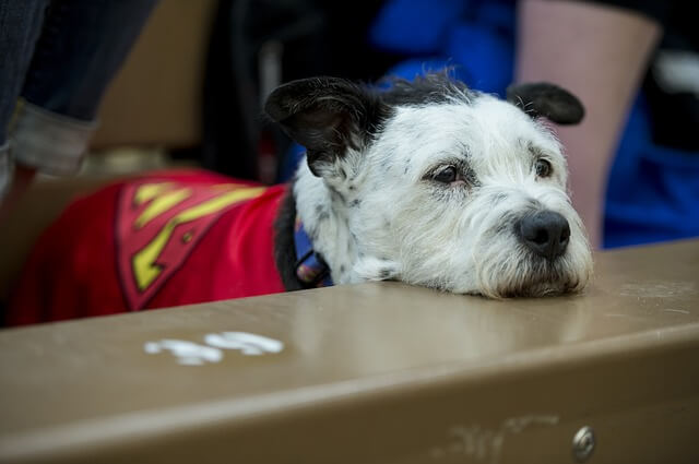 飼い犬の鳴き声・騒音トラブルの具体的な9つの対応方法