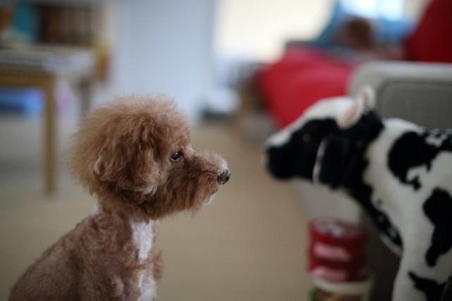 初めての方に。ペット交配のルールと依頼者に有利な契約方法