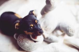 犬・猫の里親譲渡を決める前に確認する3つの重要事項