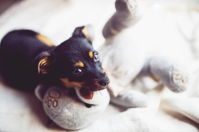 犬・猫の里親譲渡前にチェックするべき3つの重要事項とは?