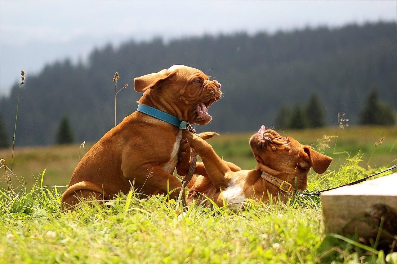 犬の噛みつきトラブルの示談書・和解書の詳細な書き方(文例付き)