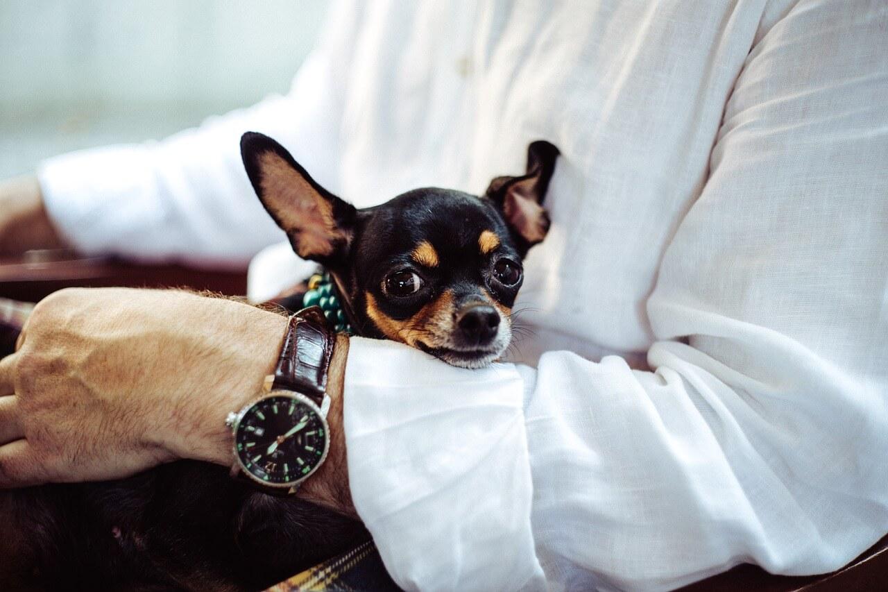経験談を伝えよう!愛犬の交流会イベントを成功させる3ステップ