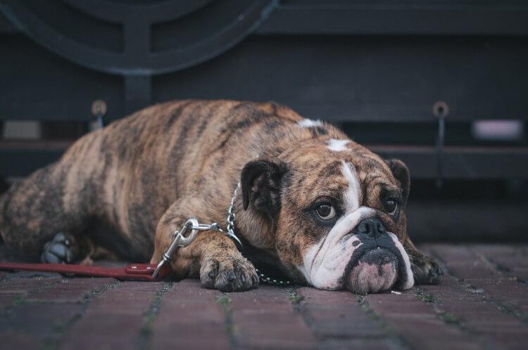 内容証明郵便で飼い犬に噛まれた治療費を請求する効果的な書き方(文例付き)