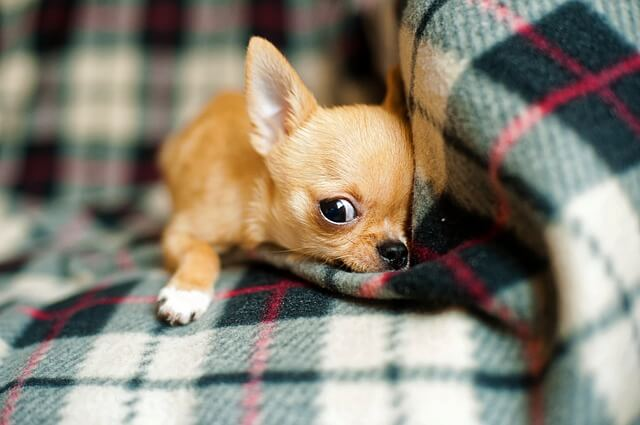 ペットショップに購入した犬・猫の治療費を請求する効果的な方法