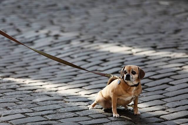 飼い犬にかまれた時の健康保険の適用方法と示談に関する注意点