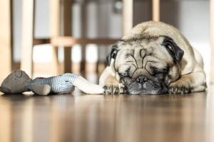 ペットの購入・里親トラブルに関する解決方法