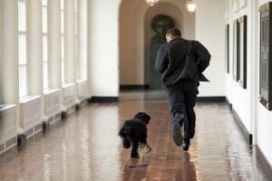 犬・猫の里親譲渡に関する知識