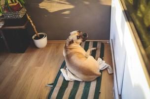 賃貸住宅におけるペットトラブル
