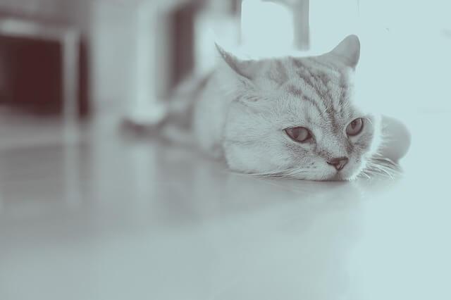 ペット禁止賃貸でのペット飼育に契約解除が認められる場合