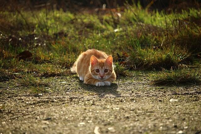 ペットトラブルで約束が守られない時の効果的な4つの対処法