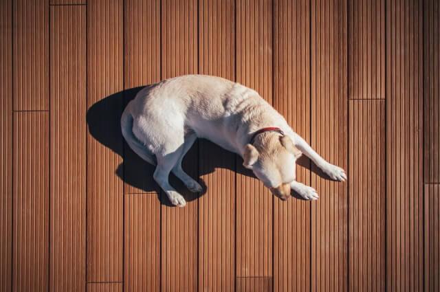 飼い犬の噛みつき・無駄吠えに対する飼育改善の差し入れ方法