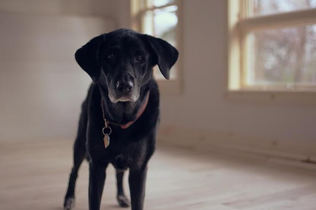ペットのお世話を任せる負担付死因贈与契約の書き方と文例