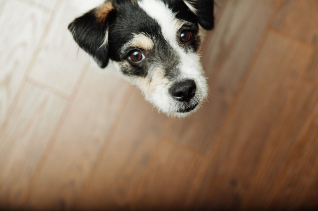 ペットのお世話を任せる負担付死因贈与契約の特徴と結び方