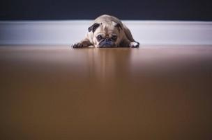 「あなたの飼い犬に噛まれた。」不当な治療費請求への対処法