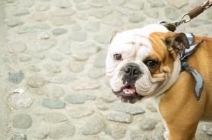 愛犬が人を噛んだ場合の保健所の対応と殺処分の可能性
