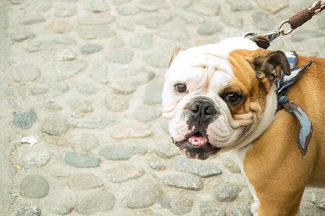 愛犬が人を噛んだ時の保健所の対応と殺処分の可能性
