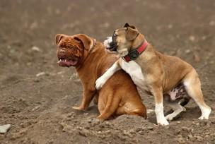 飼い犬同士のケンカでの過失割合を判断する8つの確認事項