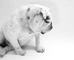 ペットトラブルで求めるべき獣医診断書への詳細原因の記載