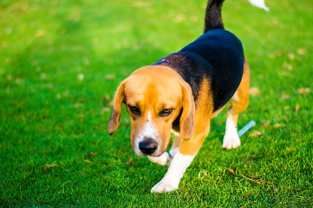 飼い犬の噛みつきの治療費・慰謝料の時効と効果的な請求手順