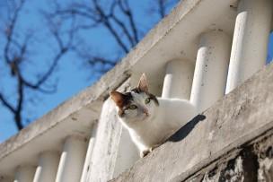 迷い猫・犬を保護した時の効果的な飼い主・里親探しの手順