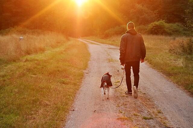 いつかは来る別れ。飼い犬の死亡時の手続きと必要書類一覧