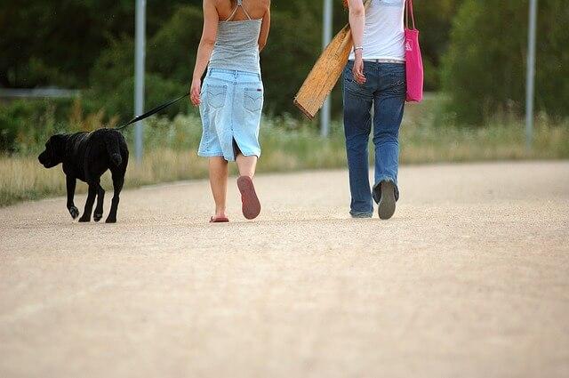 散歩代行・シッター依頼時の犬の散歩トラブルの法的責任
