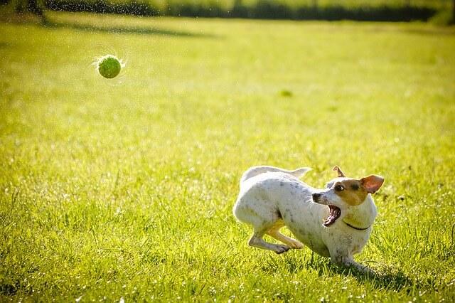 愛犬が人を噛んだ時に飼い主が行う届出と話し合いの手順