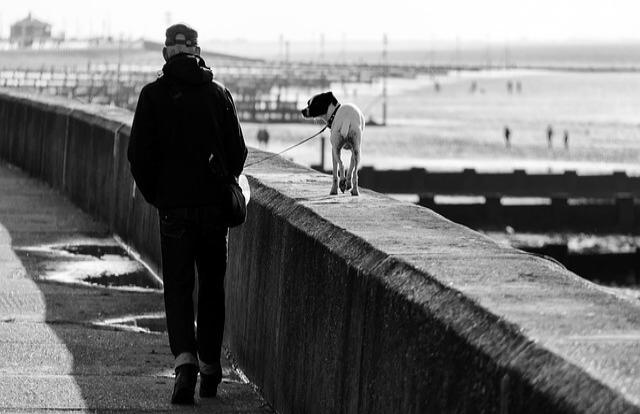 愛犬の散歩を任せた時の咬傷事故の法的責任とは?
