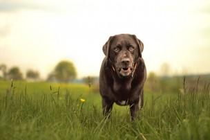 犬の噛みつき・騒音の改善要望を飼い主へ効果的に伝える方法
