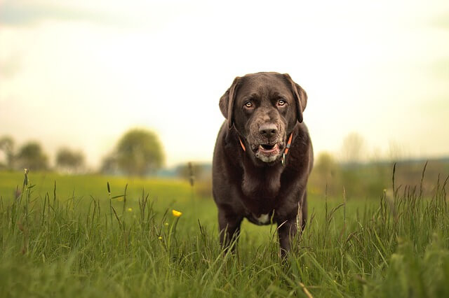犬の飼育改善要望を飼い主へ効果的に伝える方法とは?