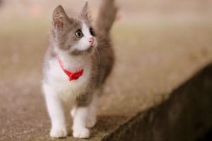 愛犬・愛猫の一時的お預かり