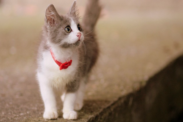 犬・猫の一時預かりの注意点と5つのトラブル予防策