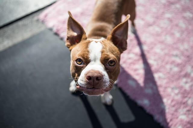 優良ペットシッターに出会う18の選び方とトラブル回避方法