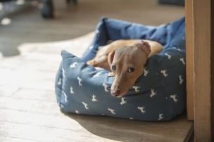 犬の飼い主が確認しておくべき法律と条例・規則の一覧