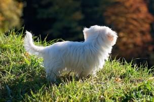 愛犬の迎え入れ時と各種の変更時に行う手続きの詳細一覧