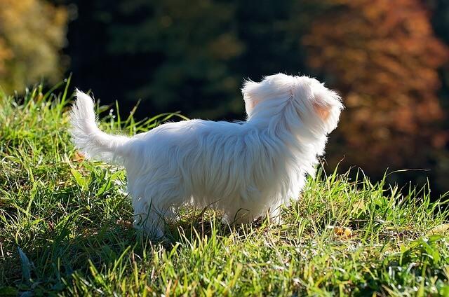 死亡時など飼い犬の各種変更時に行う手続きの詳細一覧