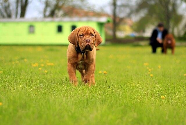 ペットトラブルにおける効果的な謝罪の仕方と解決手順