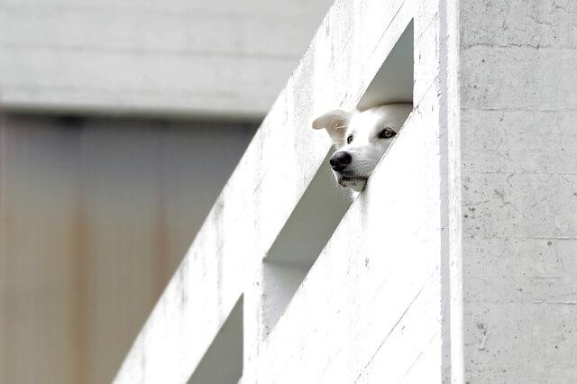犬の噛みつきトラブルにおける平和的な話の切り出し方