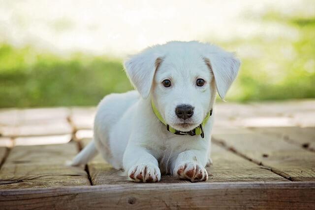 ペットサービスに特有の禁止事項